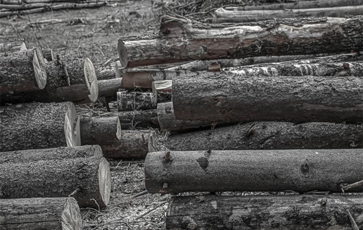 伐採された木の画像